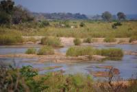 Wild Side: Kruger National Park