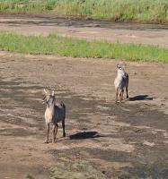 Kruger Park Tragedy