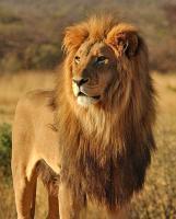Large Animals - Kruger Park