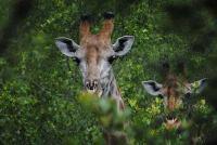 Summer in the Bushveld